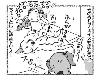 08032017_dog4.jpg