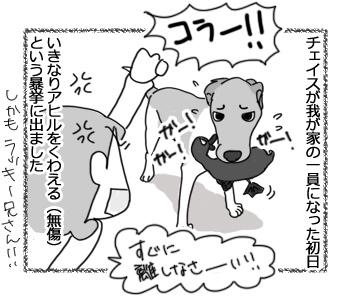 09032017_dog1.jpg