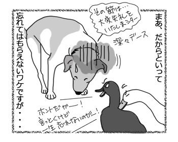09032017_dog4.jpg