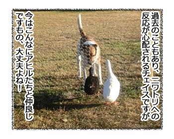 10032017_dog4.jpg