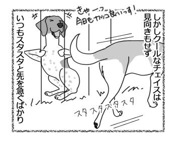 11042017_dog2.jpg