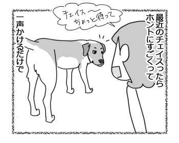 14022017_dog1.jpg