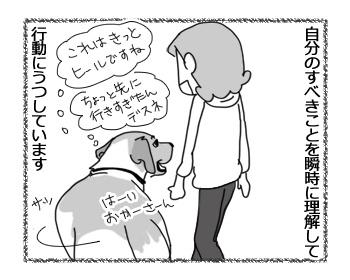 14022017_dog2.jpg