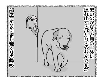 14032017_dog2.jpg