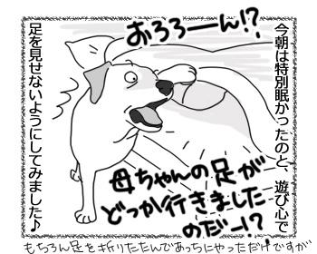 16022017_dog2.jpg