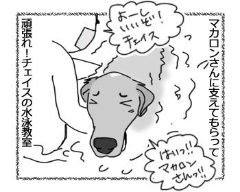 20022017_dog1.jpg