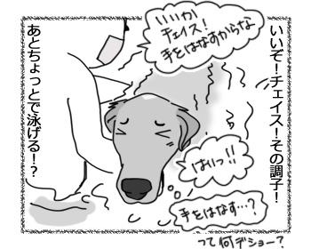 20022017_dog2.jpg