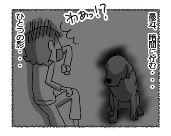 20032017_dog3.jpg