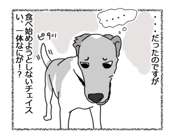 21022017_dog3.jpg