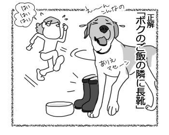 21022017_dog4.jpg