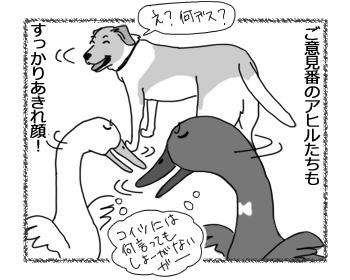22022017_dog4.jpg