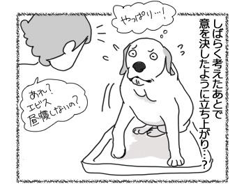 22032017_dog5.jpg