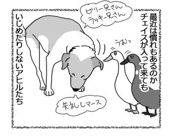 23022017_dog1.jpg