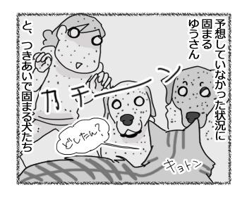 24022017_dog2.jpg