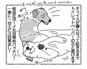 28032017_dog4.jpg