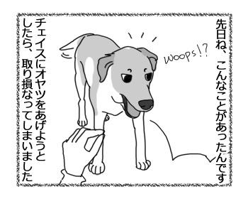 29032017_dog1.jpg