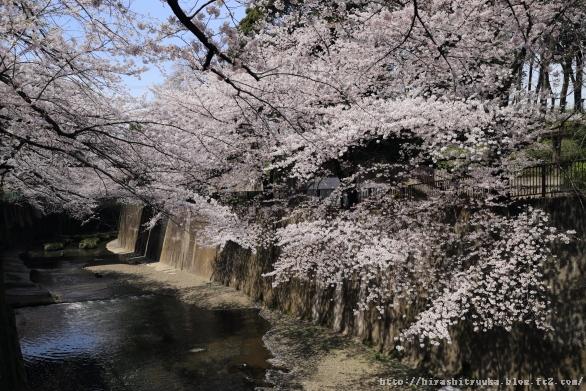 石神井川沿い3-SN