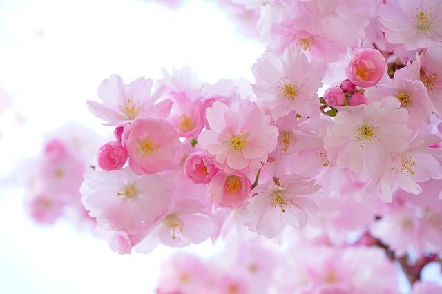 春になると思い出す面白オカシイ小学生時代の記憶と小学生へのお願い