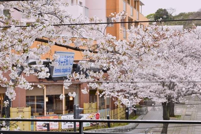 バルコニー桜5