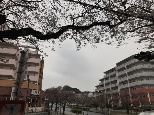 雨のセール (3)