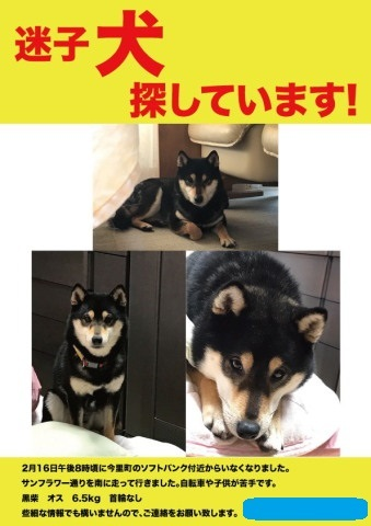 maigo-ask02.jpg