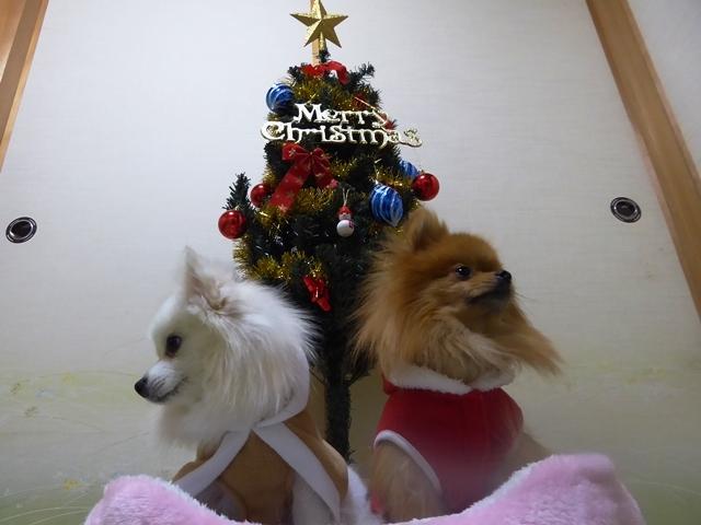 20161211ポンころクリスマス③