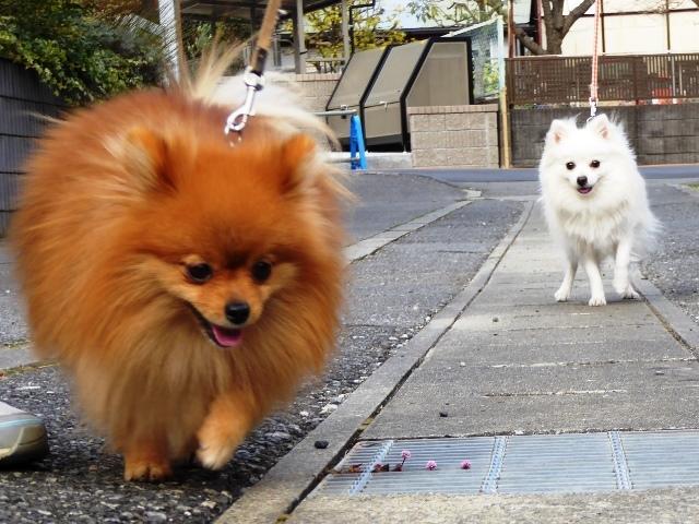 20161225ポンころ散歩⑦