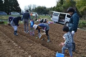 ほりもと農園2017種イモ植え04