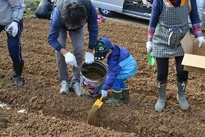 ほりもと農園2017種イモ植え02