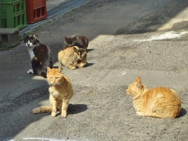 DSCF2980 猫の群れ(600x449)