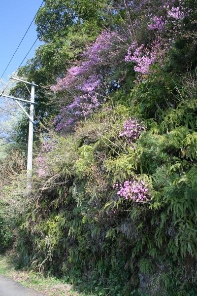 052 IMG_8465 道端の花(400x600)