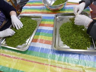 茶葉の仕分け作業風景