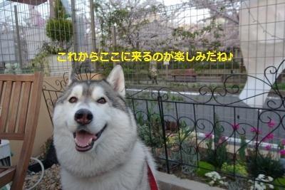 IMGP0502_convert_20170412225002.jpg