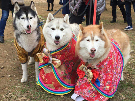 ハスキーズひな祭りウォーク2017