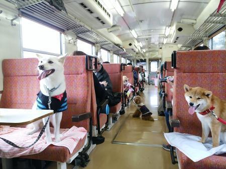 ワンコ列車④縮小