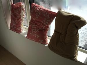 枕を日光消毒
