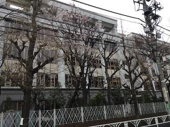 東京女学館の桜2