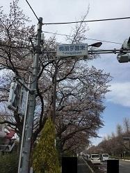 桐朋な桜2