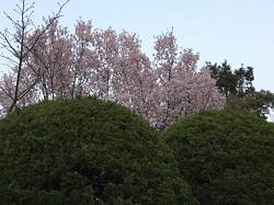 横浜F葉2