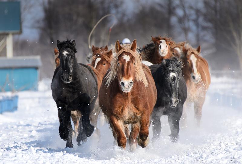 馬 (12 - 12)