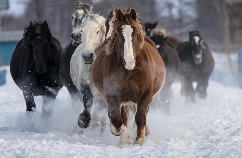 馬 (2 - 12)