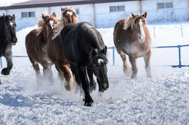 馬 (11 - 12)