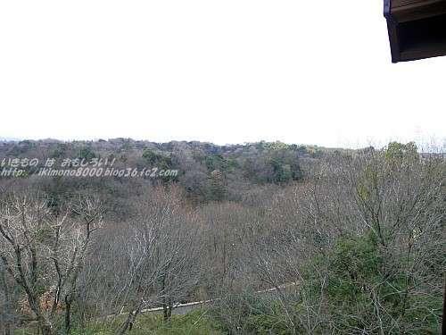 展望台から見た落葉して寒々としたコナラ林