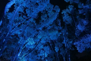 161221shokubutsuen037.jpg
