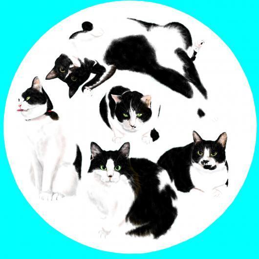 隠れている猫白_convert_20170301203804