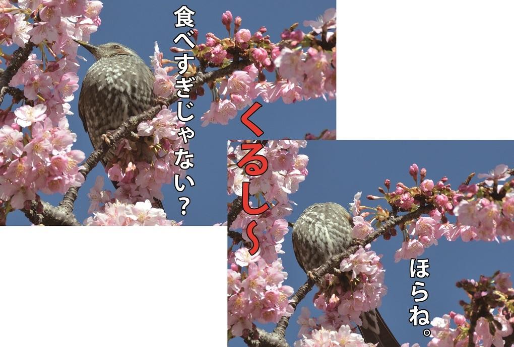 hiyodori.jpg