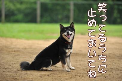笑ってるうちにな