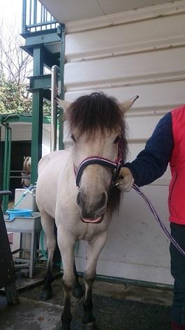 ゆきちゃん 馬の博物館