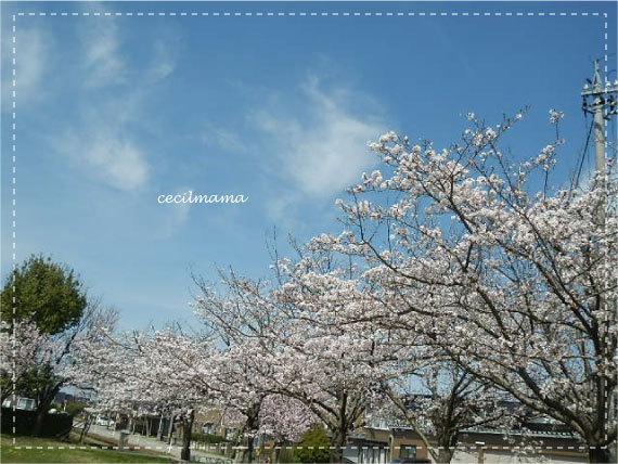 2017_桜