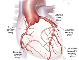1-coronary-arteries-labels-320-240-20140102101056.jpg